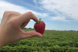 手工草莓果酱