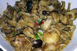 松茸香菇炖鸡