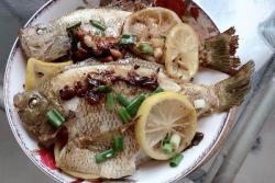 柠檬太阳鱼